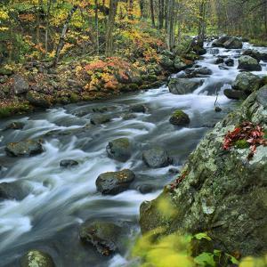Stream Flowing Through Lake George Wild Forest, New York by Tim Fitzharris
