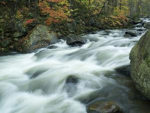 Stream in Lake George Wild Forest, New York by Tim Fitzharris