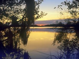 Sunset at Paurotis Pond, Everglades National Park, Florida, Usa by Tim Fitzharris