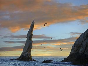 Sunset, Brown Pelicans on Rock Formation, Cabo San Lucas, Mexico by Tim Fitzharris