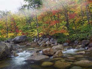 Swift River flowing through fall colored forest, White Mountains National Forest, New Hampshire by Tim Fitzharris