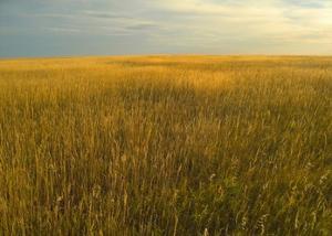 Upper prairie in Badlands National Park, South Dakota by Tim Fitzharris