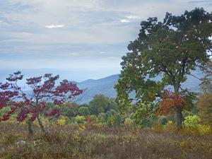 View from Pass Mountain Overlook, Shenandoah National Park, Virginia by Tim Fitzharris