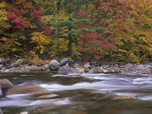 Wild River, White Mountains National Forest, Maine by Tim Fitzharris