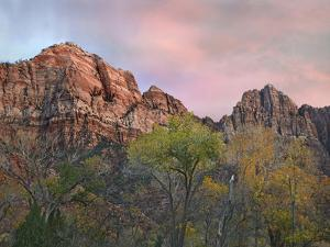 Zion Canyon, Zion National Park, Utah by Tim Fitzharris