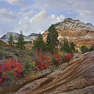 Zion Plateau in Autumn, Zion National Park, Utah by Tim Fitzharris