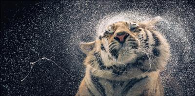 Kanja by Tim Flach