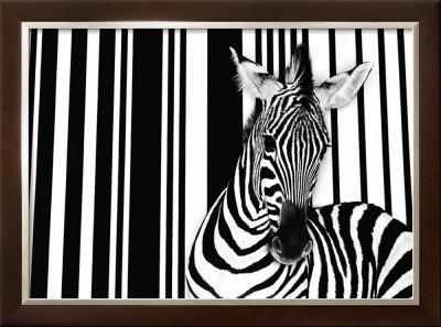 Zebra I by Tim Flach
