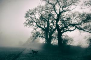 A Black Dog in a Field by Tim Kahane