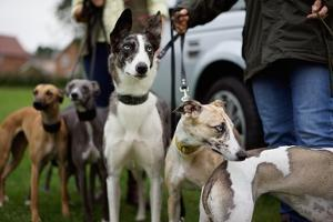 Dogs at Dog Show by Tim Kahane