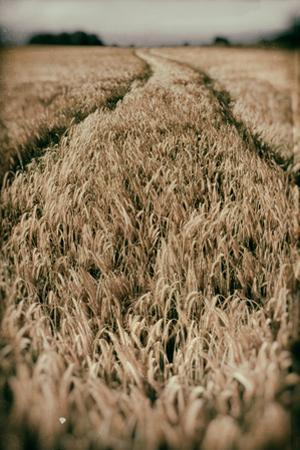 Fields of Wheat by Tim Kahane
