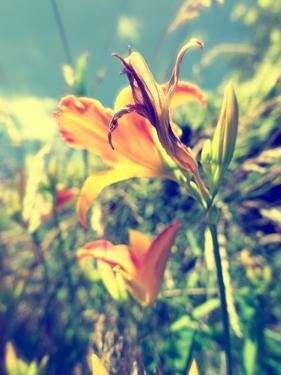 Garden Flowers by Tim Kahane