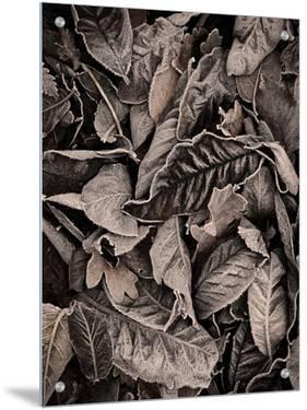 Sepia Leaves by Tim Kahane
