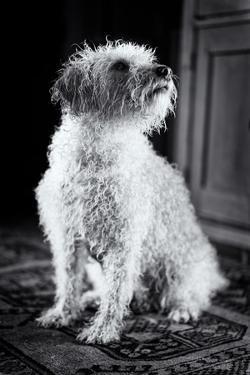 Small Dog Sitting by Tim Kahane