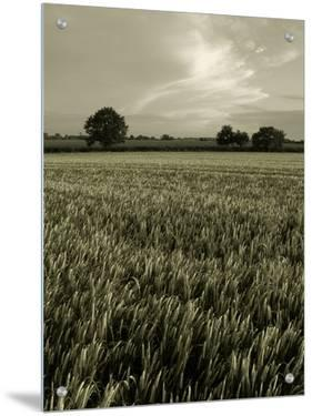 Suffolk Field by Tim Kahane