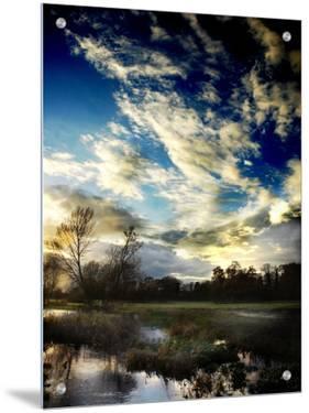 Water Meadow by Tim Kahane