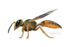 A Wasp by Tim Knepp