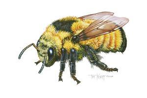 Bumble Bee by Tim Knepp