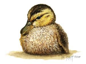 Duckling by Tim Knepp