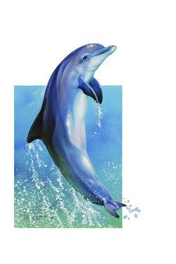 Jump Dolphin by Tim Knepp