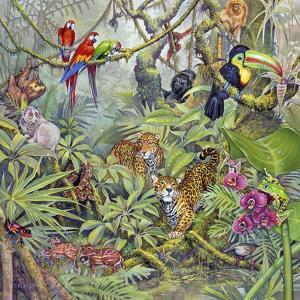 Jungle by Tim Knepp
