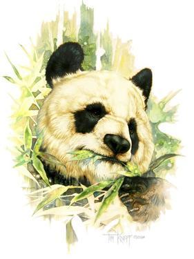 Panda by Tim Knepp