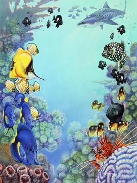 Puffer Reef by Tim Knepp