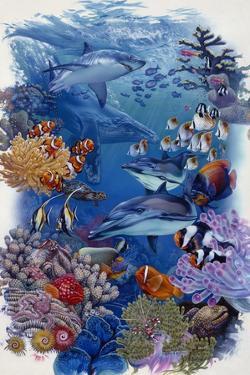 Reef by Tim Knepp