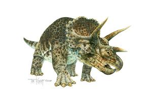 Triceratops by Tim Knepp