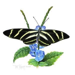 Zebra Butterfly by Tim Knepp