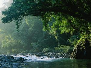 A River Flows Through a Northern Sierra Madre Natural Park Rainforest by Tim Laman