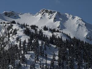 A View of Snow-Blanketed Whistler Peak Forested with Evergreen Trees by Tim Laman