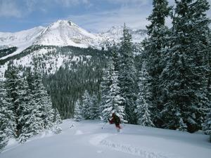 Backcountry Skiing into an Evergreen Forest by Tim Laman