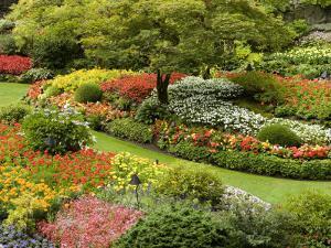 Butchart Gardens in Bloom by Tim Laman
