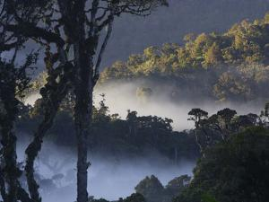 Early morning mist hangs in the valleys at sunrise in the rain forest by Tim Laman