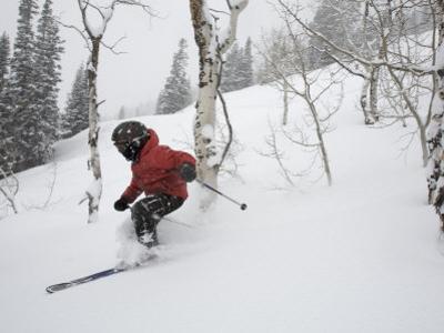 Eight-Year-Old Boy Skiing Through Trees on a Fresh Powder Day by Tim Laman