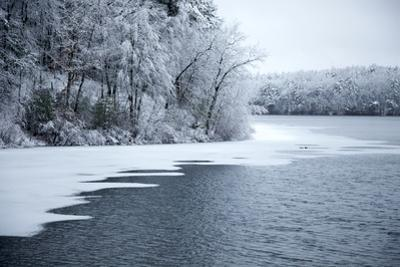 Fresh snow covers trees at the edge of Walden Pond. by Tim Laman