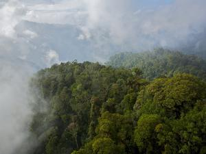 New Guinea's Foja Mountains Stand Above Surrounding Lowland Forest by Tim Laman
