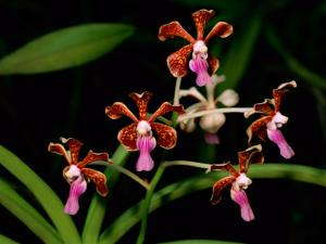 Orchids by Tim Laman