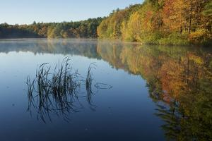 Reeds and colorful autumn leaves reflect in the waters of Walden Pond. by Tim Laman