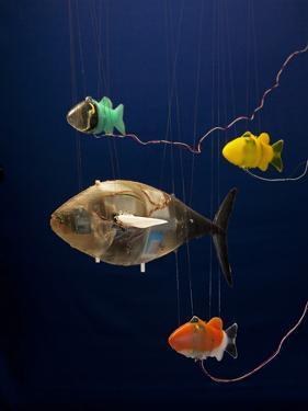 Robotic Fish Developed at Mit by Tim Laman