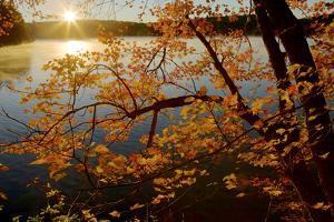 Sunrise illuminates maple leaves and mist on the pond. by Tim Laman