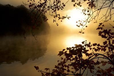 Sunrise mist. by Tim Laman