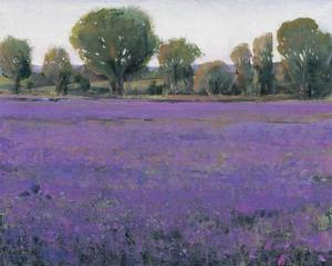 Lavender Field I by Tim