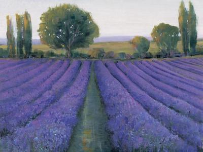 Lavender Field II