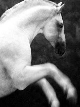 White Horse Prancing by Tim Lynch