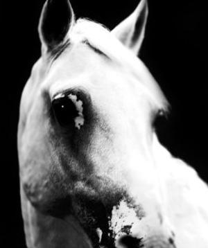 White Horse by Tim Lynch