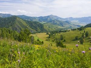 Mountains, Flower-Filled Meadows, and Farmland of the Altai Republic at Altayskiy by Tim Makins