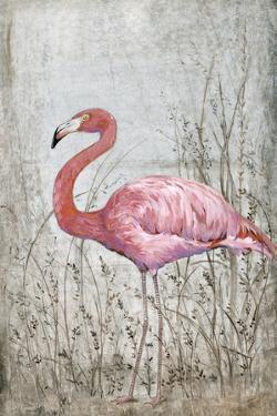 American Flamingo II by Tim O'toole