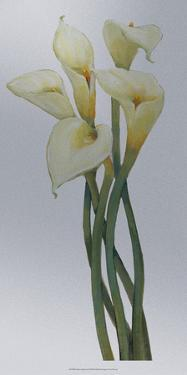 Callas on Silver I by Tim O'toole